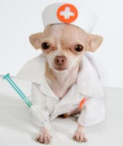 http://www.PetMedsAndRemedies.com