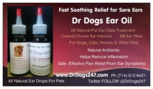 Remedy For Ear Mites and Ear Infections